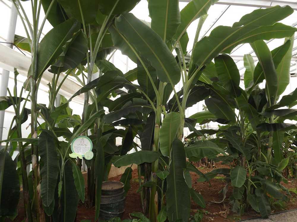 植物保raybet雷竞技凝济和营养液治理成果39